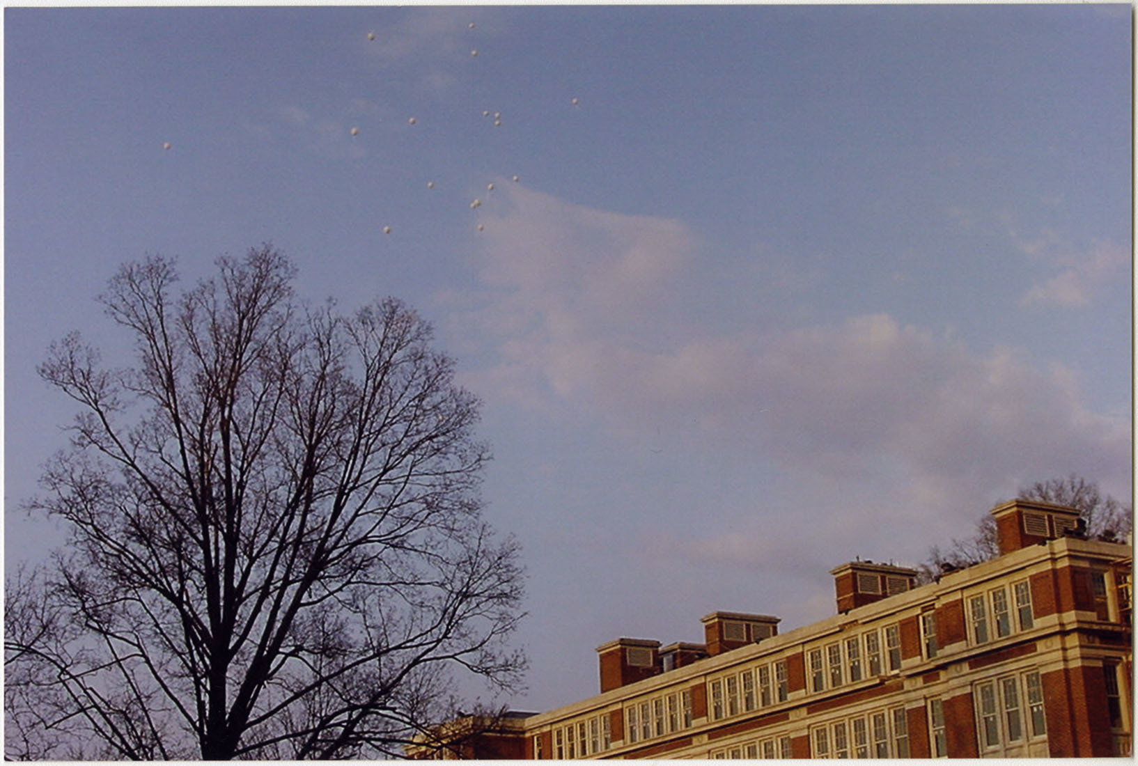 Photograph of Balloons Release with Tree View, F00048 (Ms2008-020)